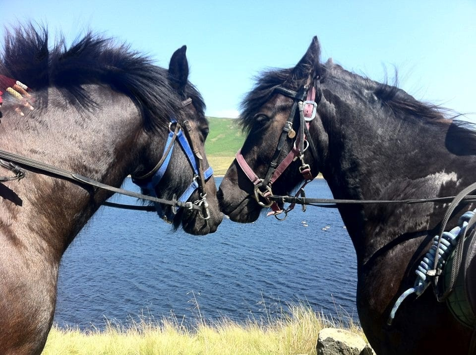 Image of two horses at the Peers Clough Pack Horses for horse riding in Rossendale page on the Visit Rossendale website